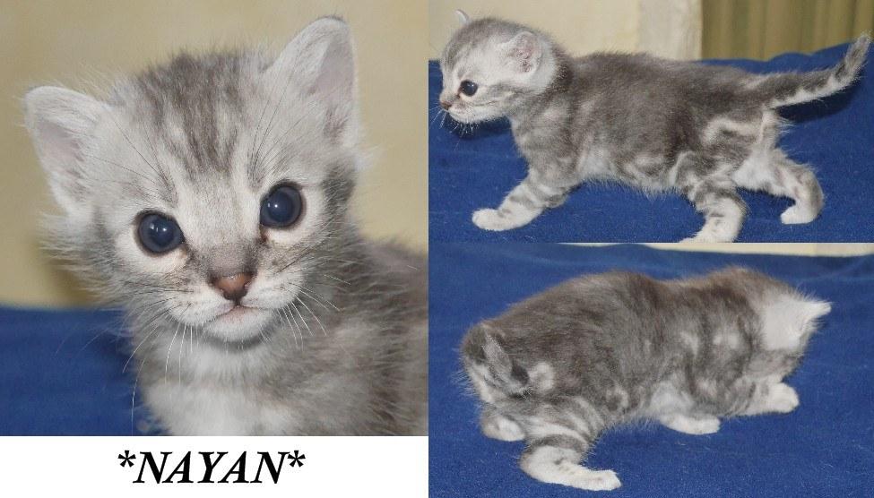 Nayan 4 Weeks