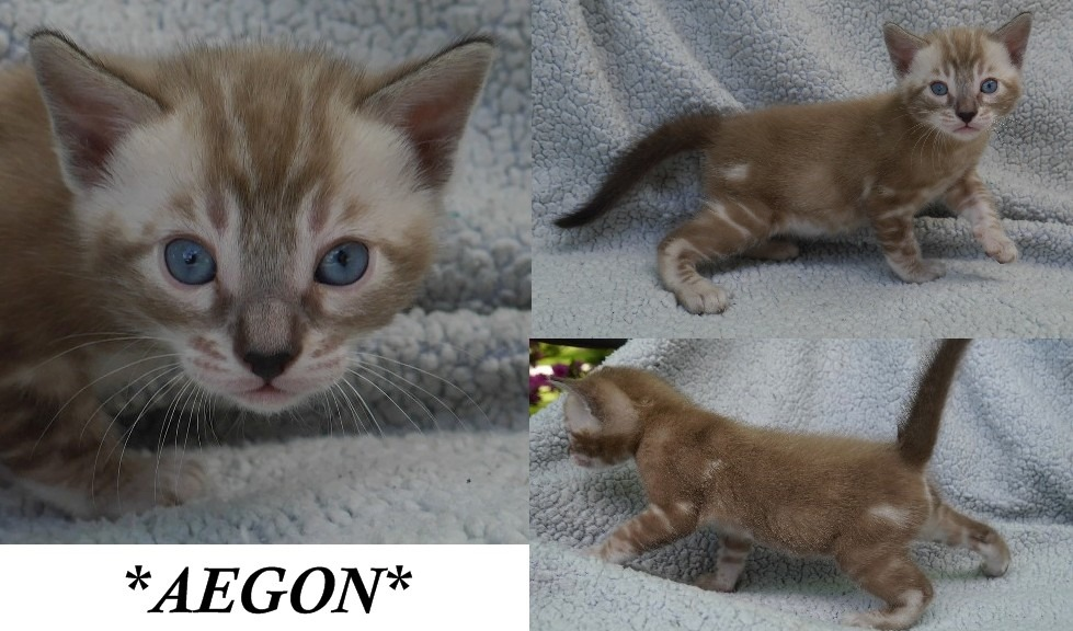 Aegon 3 Weeks