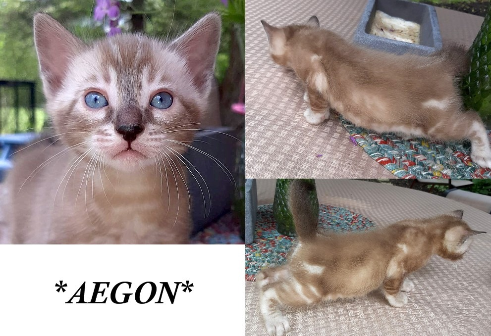 Aegon 4 Weeks