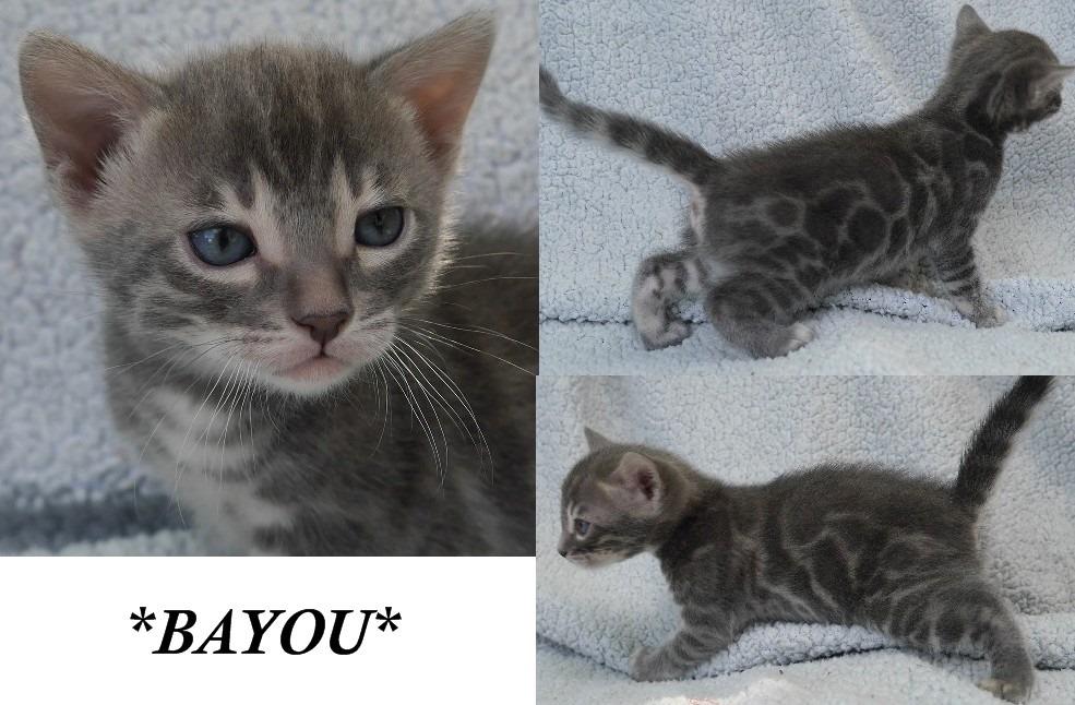 Bayou 3 Weeks
