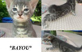 Bayou 4 Weeks