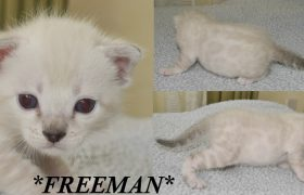 Freeman 3 Weeks