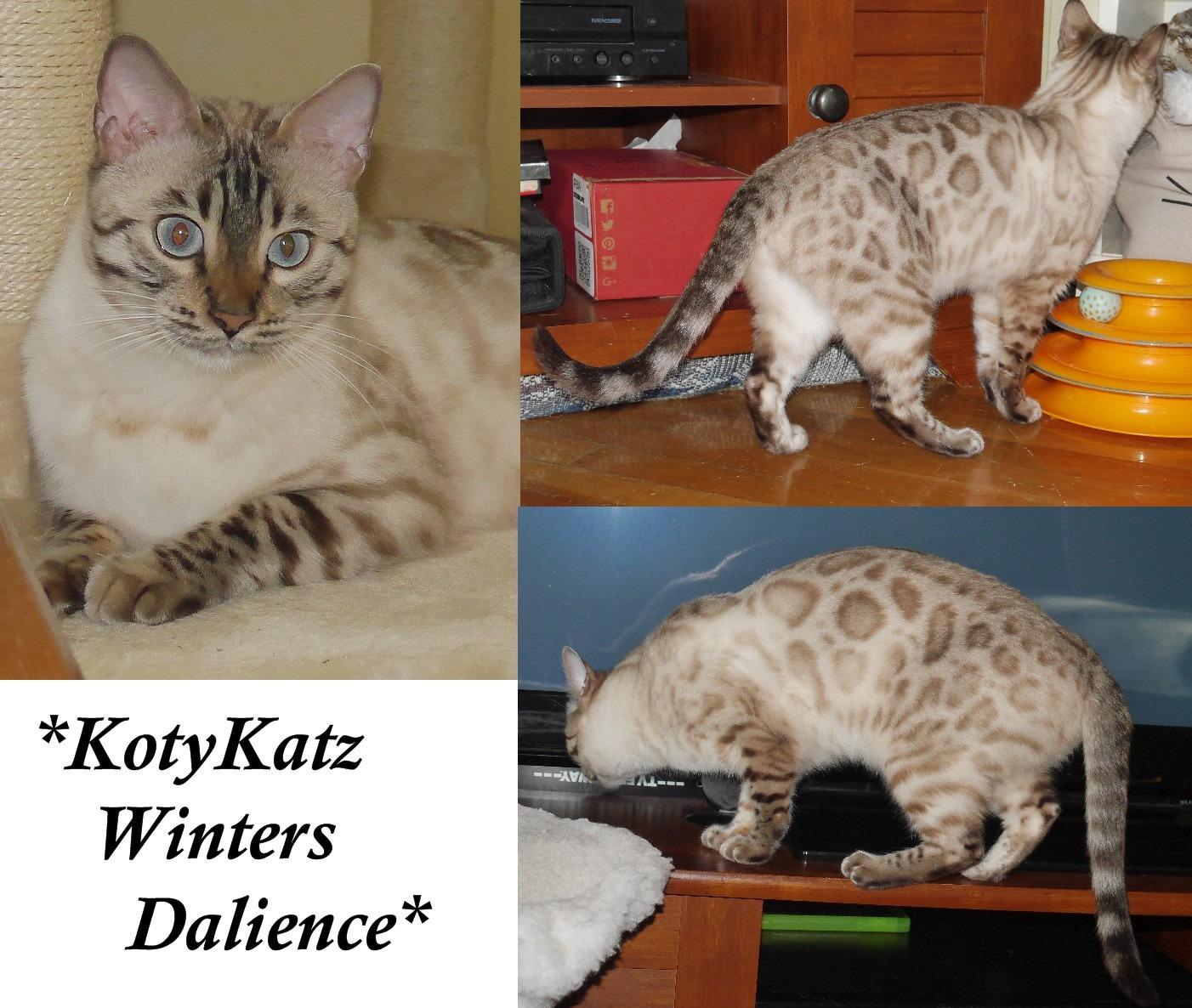 KotyKatz Winters Dalience