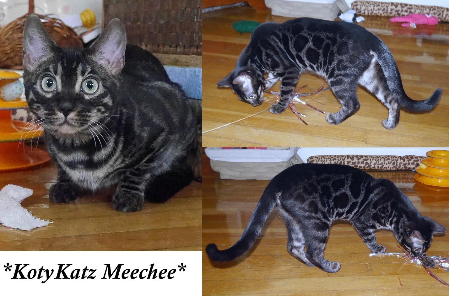MeeChee 6 Months