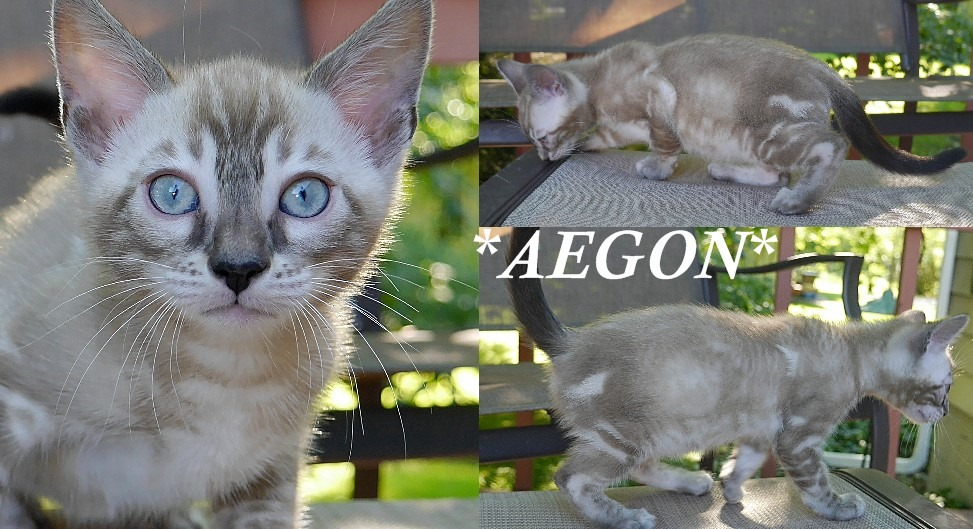 Aegon 7 Weeks