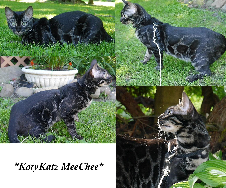 KotyKatz MeeChee 9 Months