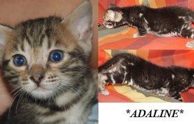 Adaline 5 Weeks