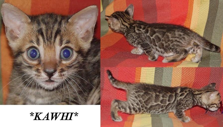 Kawhi 5 Weeks