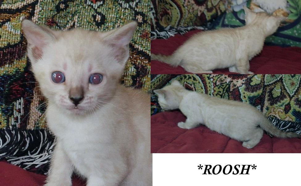 Roosh 5 Weeks