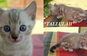 Tallulah 6 Weeks