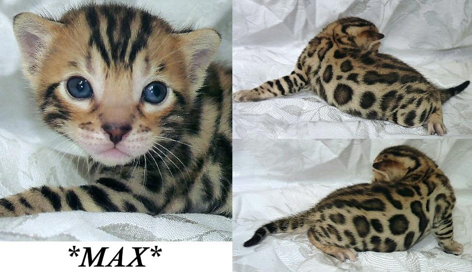 Max 3 Weeks