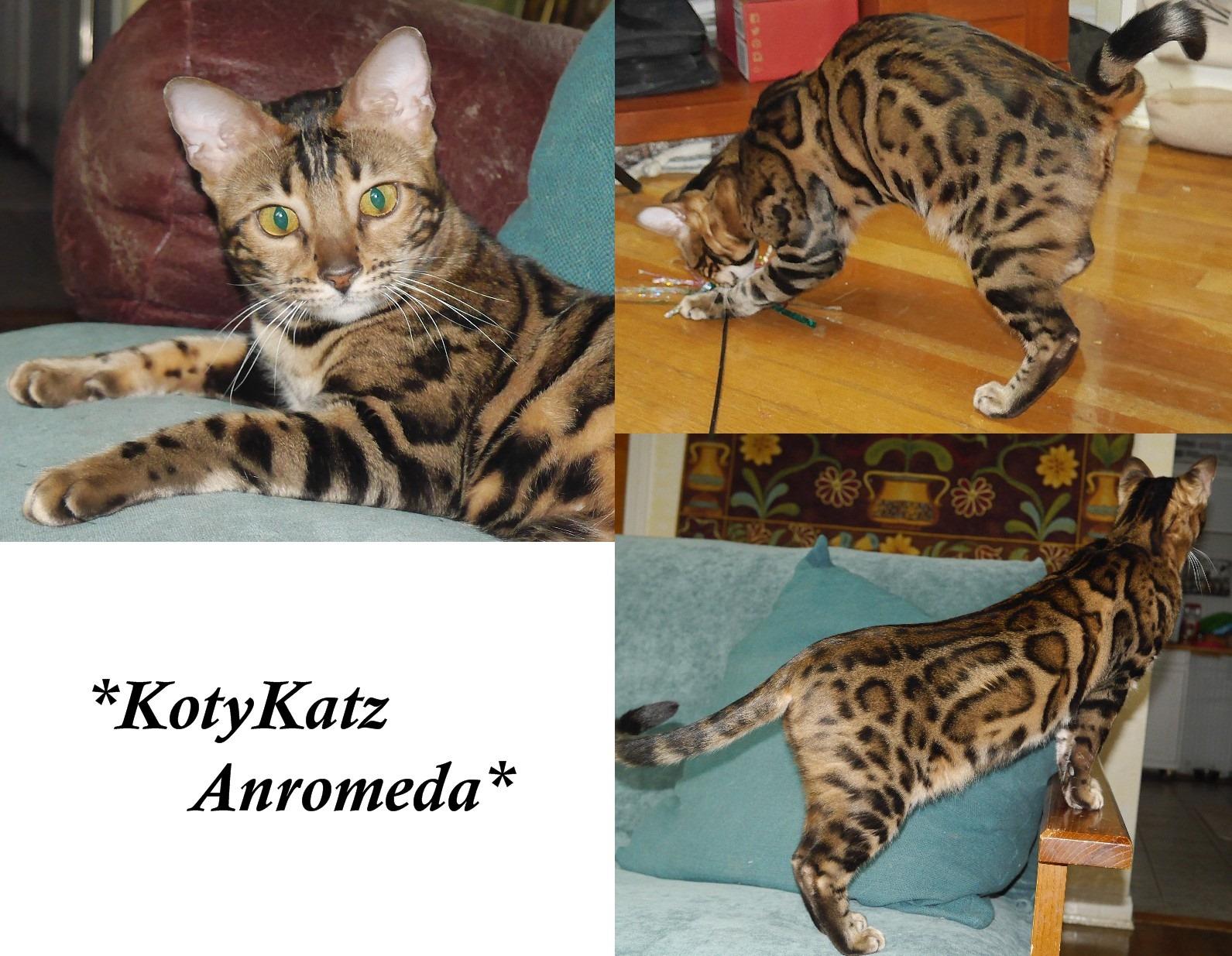 KotyKatz Anromeda