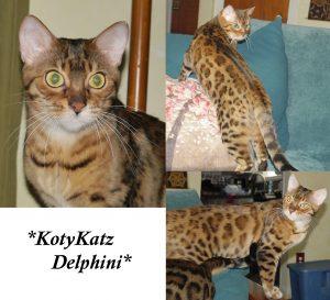KotyKatz Delphini