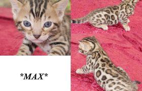 Max 4 Weeks