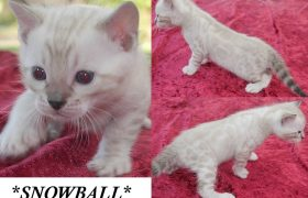 Snowball 4 Weeks