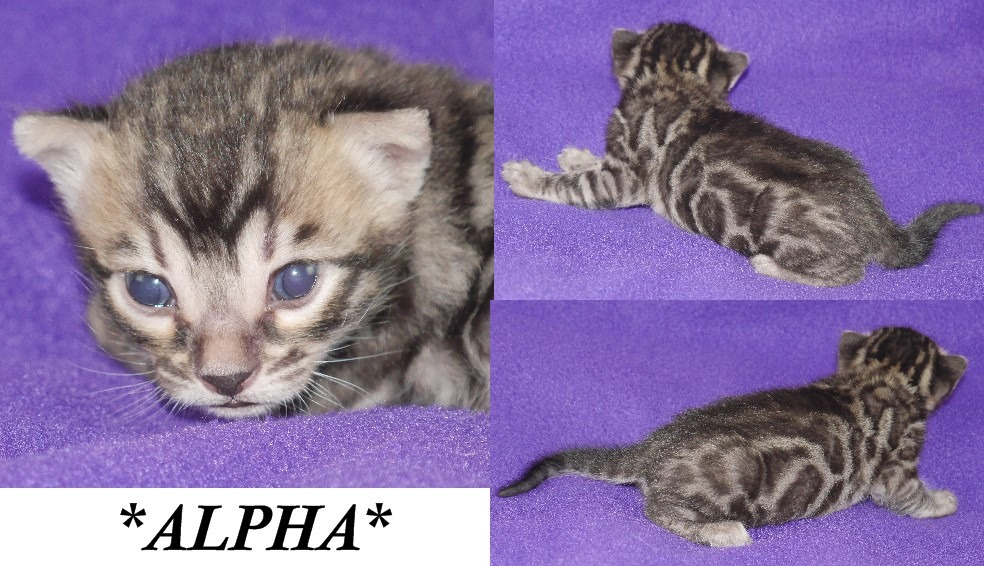 Alpha 1 Week