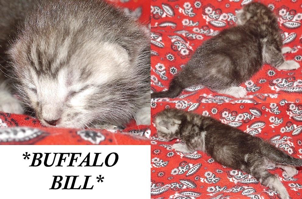 Buffalo Bill NB