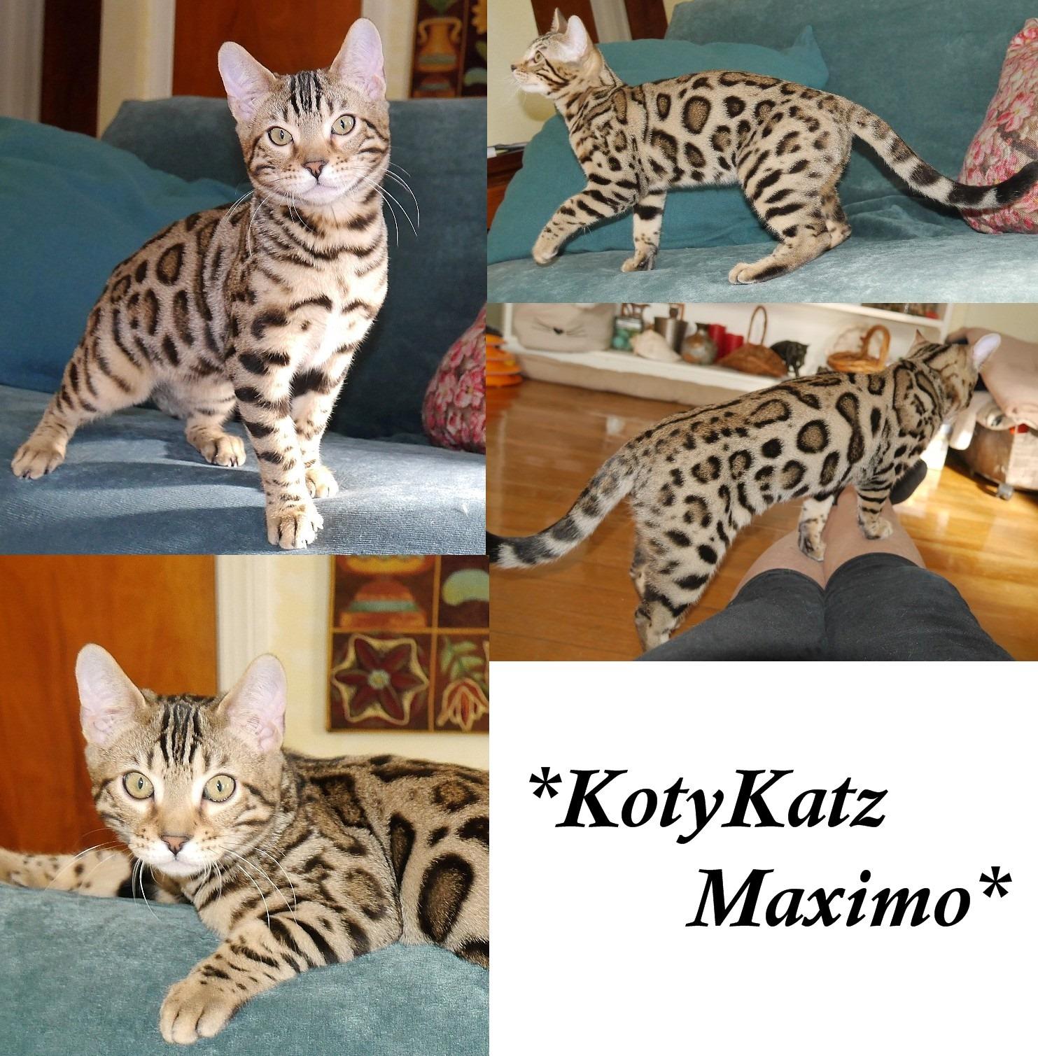 KotyKatz Maximo