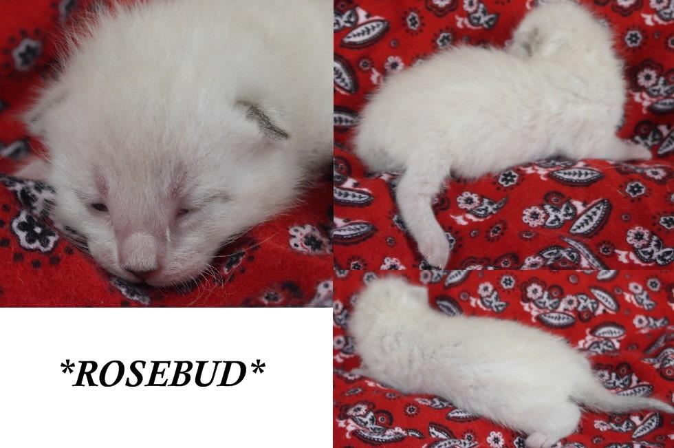 Rosebud NB