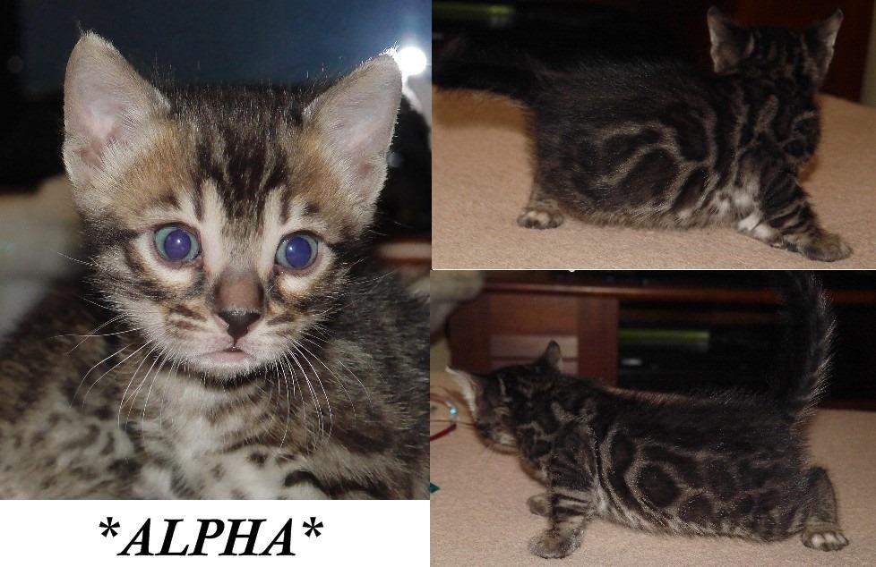 Alpha 4 Weeks