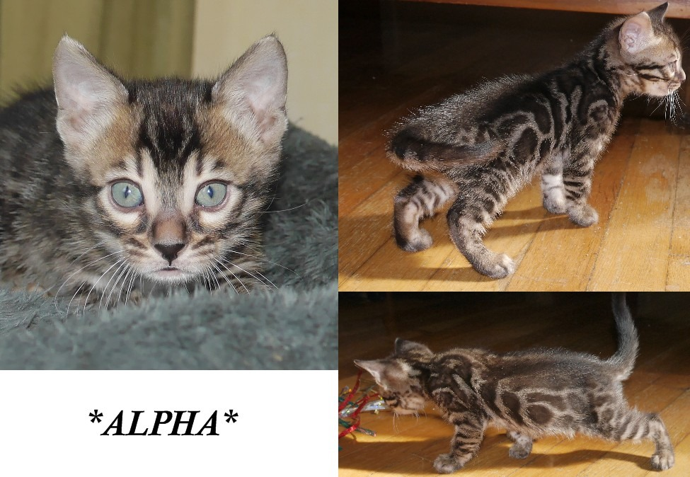Alpha 5 Weeks