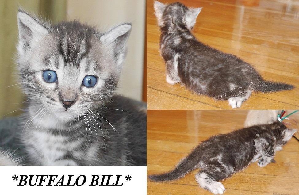 Buffalo Bill 4 Weeks