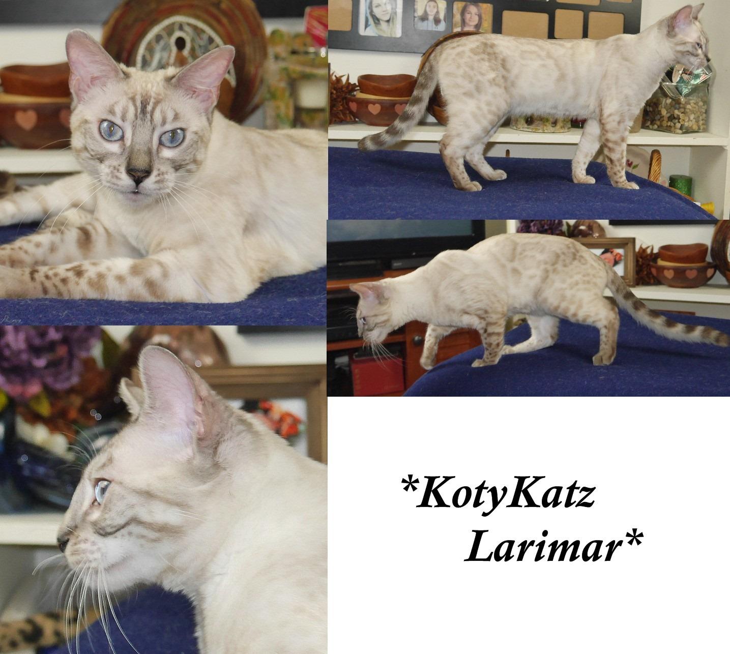 KotyKatz Larimar