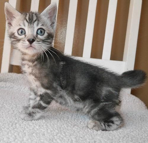Catsup 5 Weeks