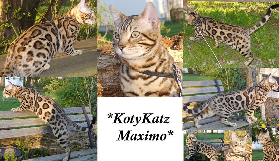 KotyKatz Maximo 8mos