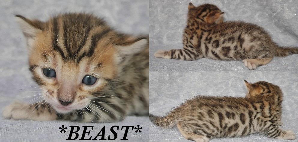 Beast 3 Wks