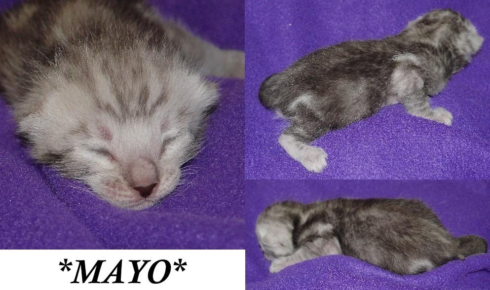 Mayo 1 week