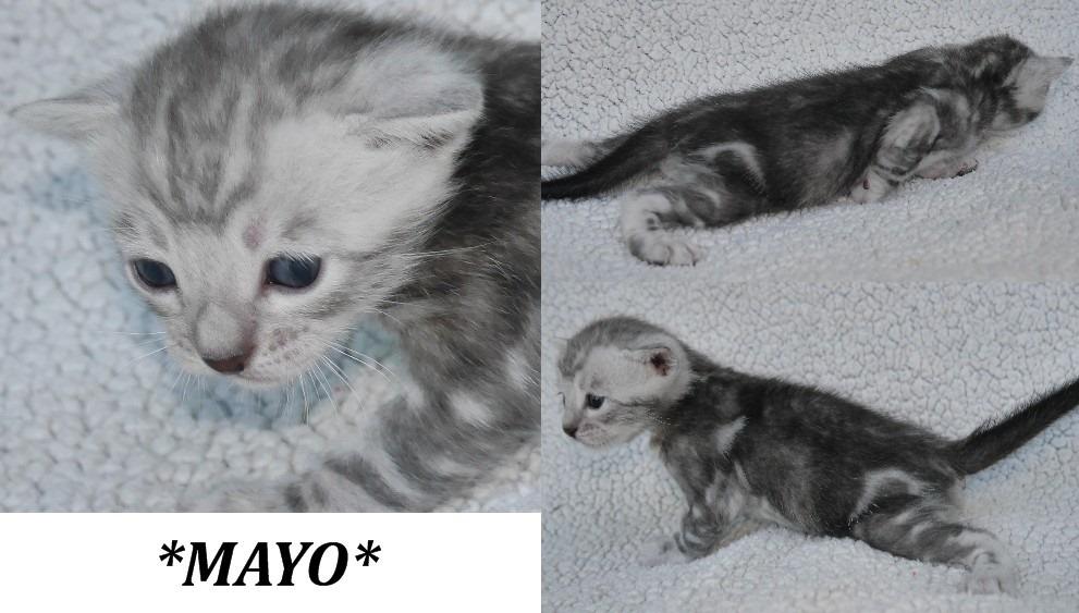 Mayo 3 Weeks