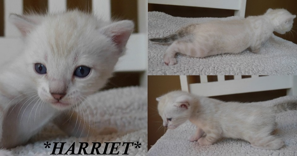 Harriet 3 Weeks