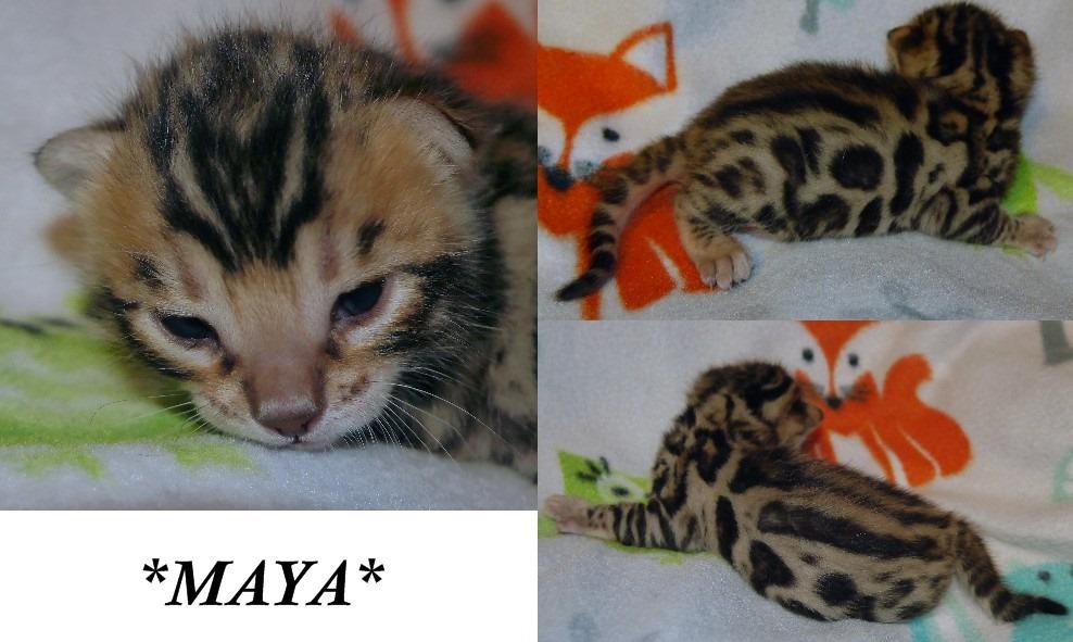 Maya 2 Weeks