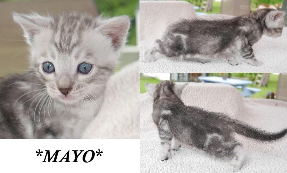 Mayo 4 Weeks