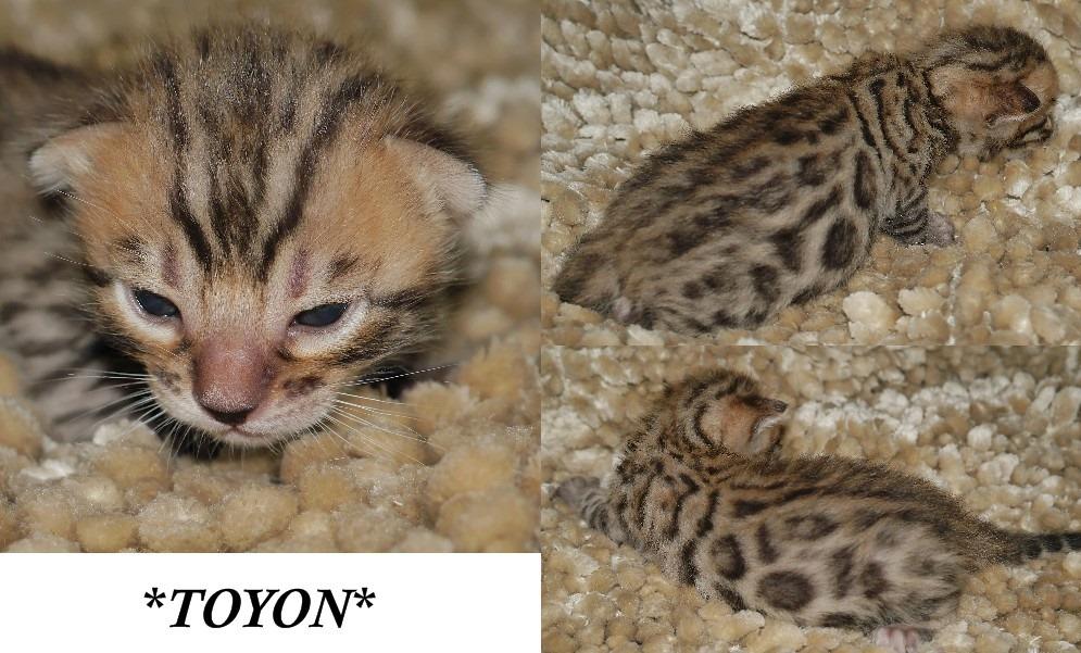 Toyon 2 Weeks