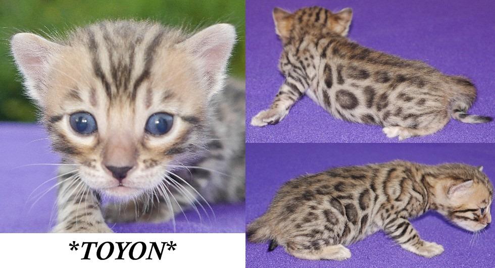 Toyon 3 Weeks