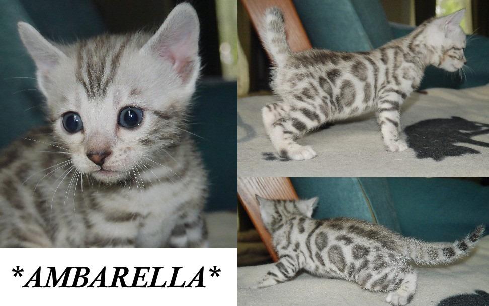 Ambarella 4 Weeks