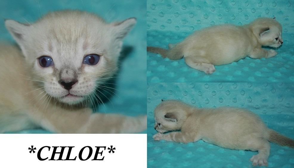 Chloe 3 Weeks