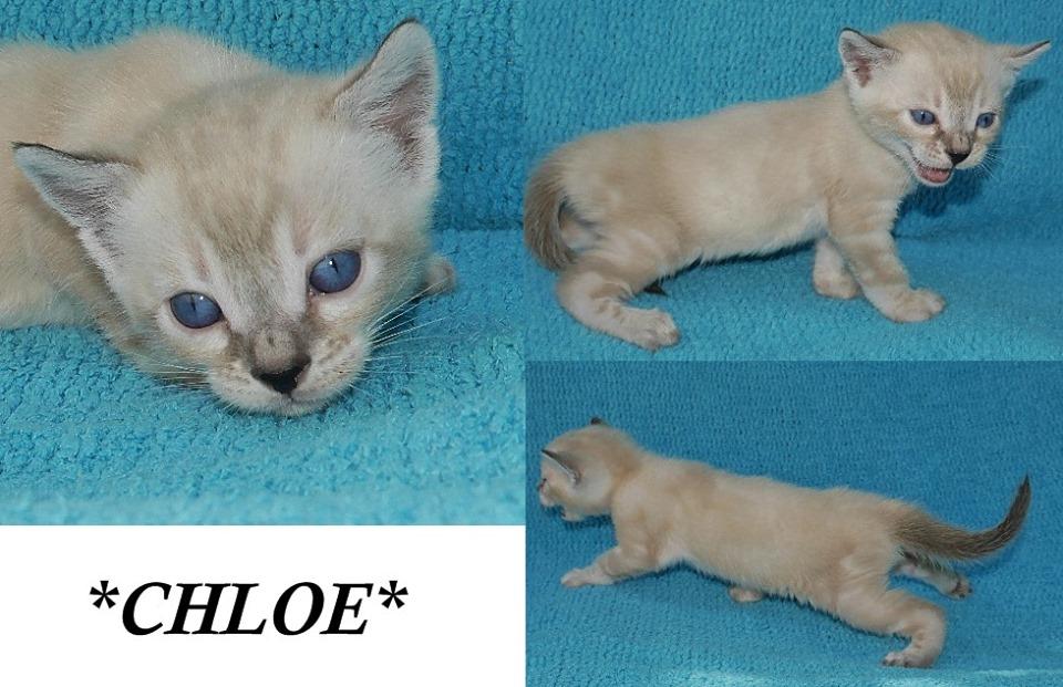 Chloe 4 Weeks