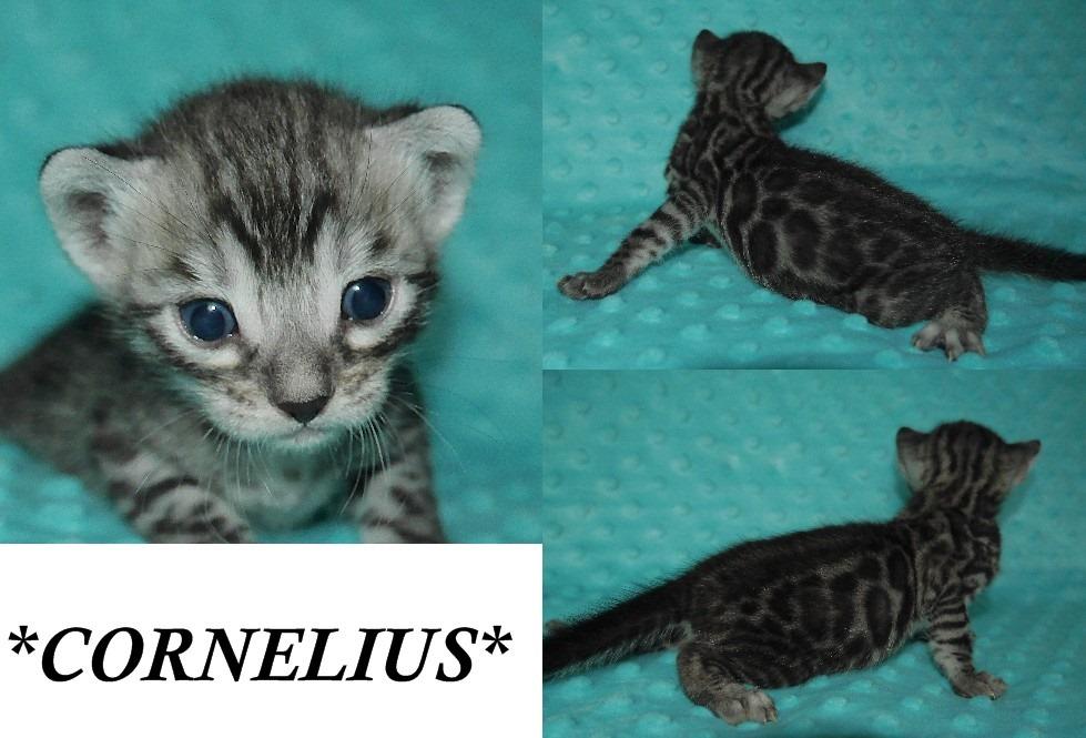 Cornelius 3 Weeks