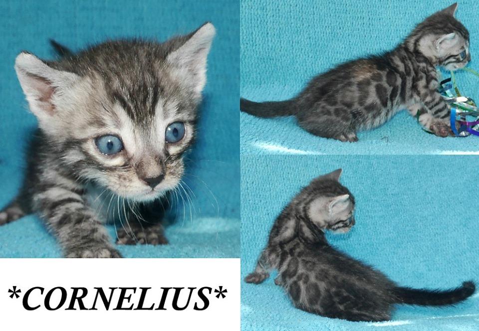Cornelius 4 Weeks