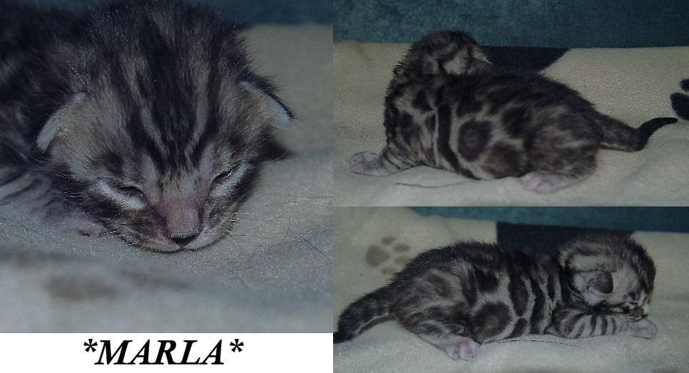 Marla 2 Weeks