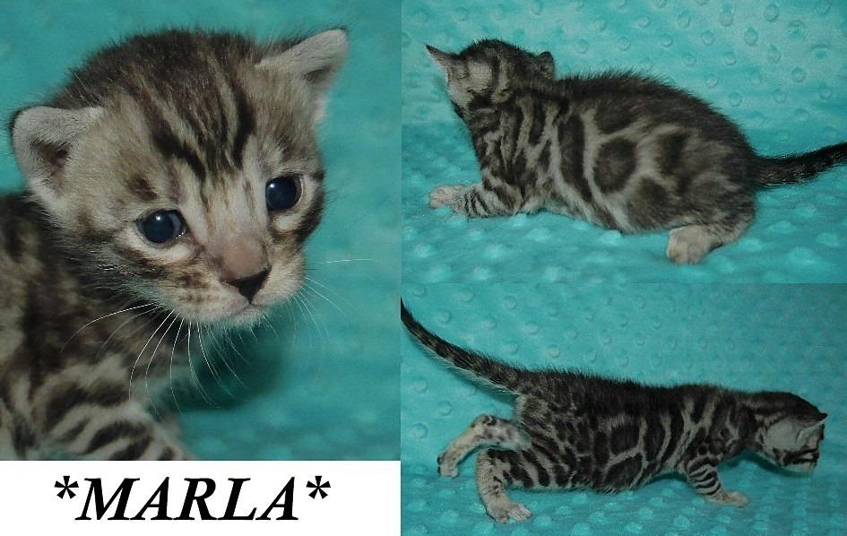 Marla 3 Weeks