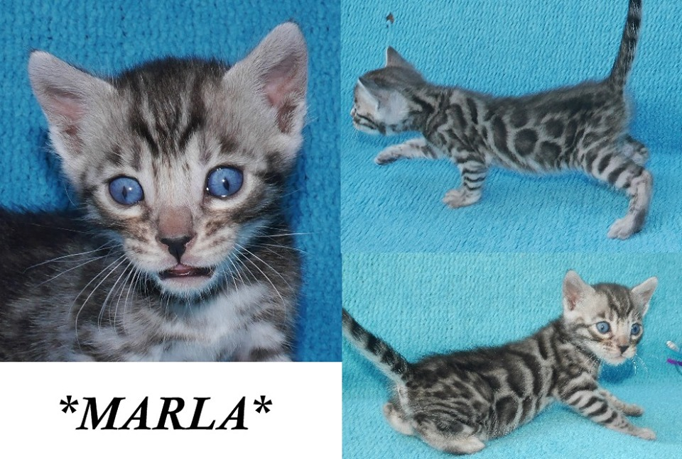 Marla 4 Weeks