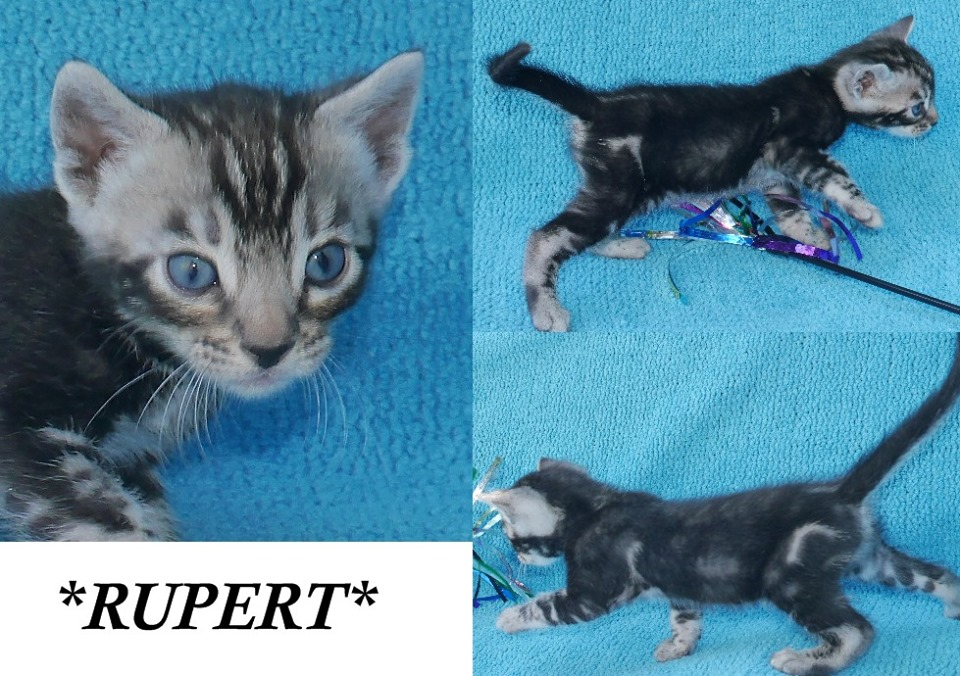 Rupert 4 Weeks
