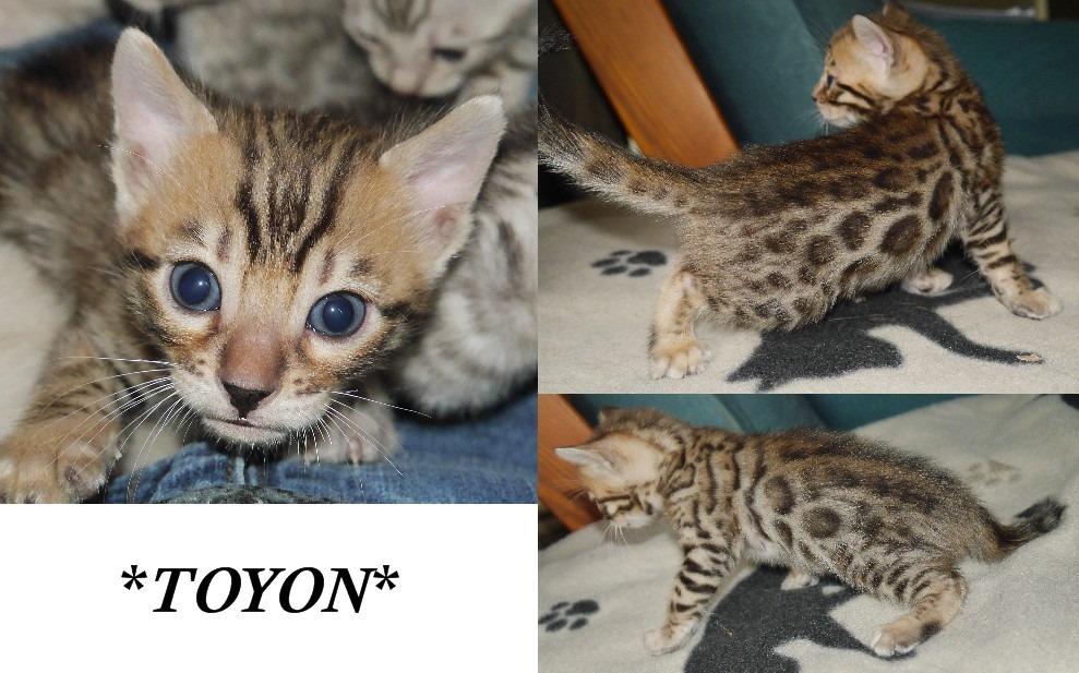 Toyon 4 Weeks