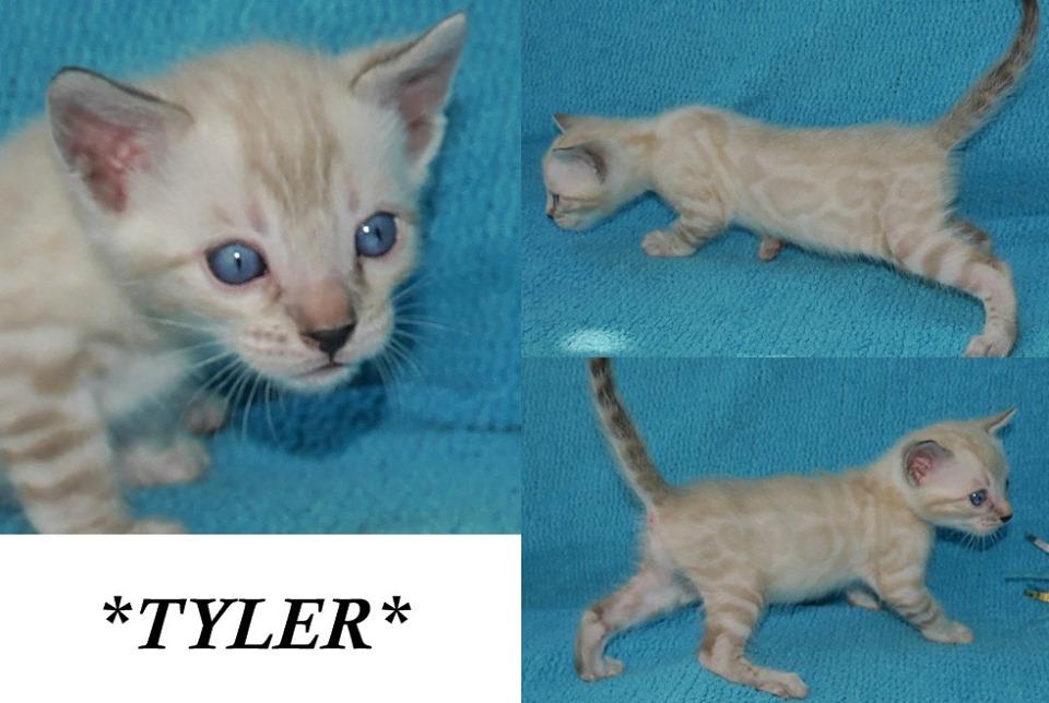 Tyler 4 Weeks