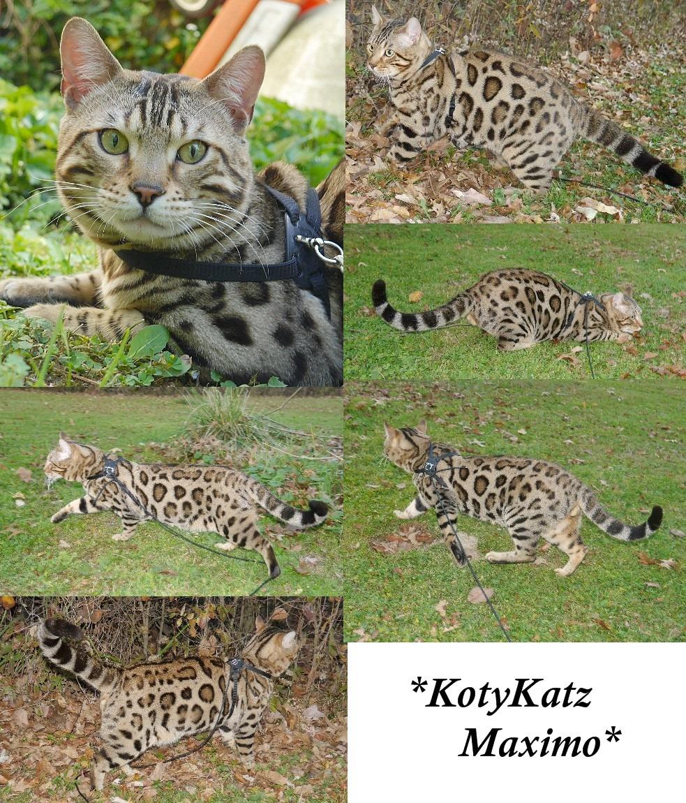 KotyKatz Maximo 1 Year 3 Months