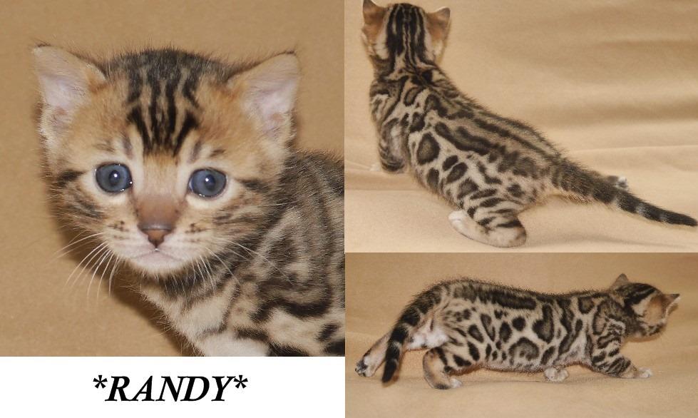 Randy 4 Weeks